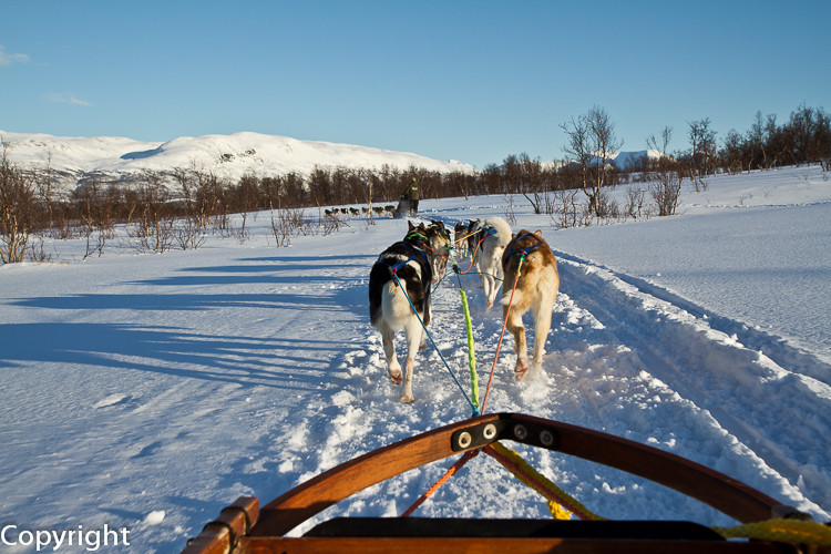 Dog Sledge in Tromsö