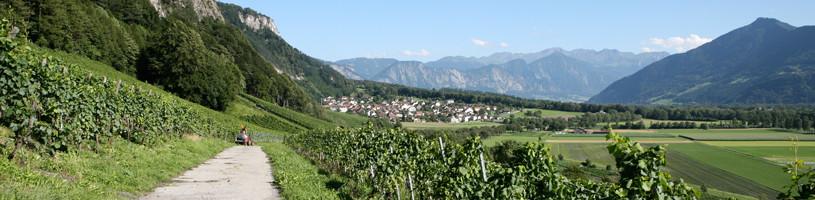 Vini Della Valle