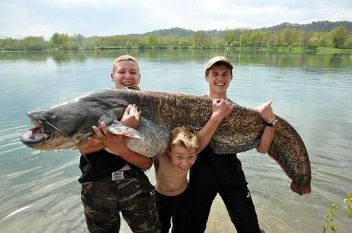 pêche du silure dans le privé