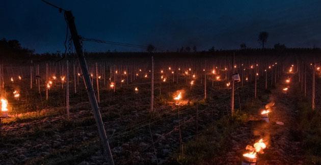 feeëriek beeld van vuurpotten in de wijngaard