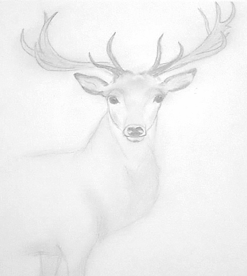 Hirsch mit Bleistift auf Papier