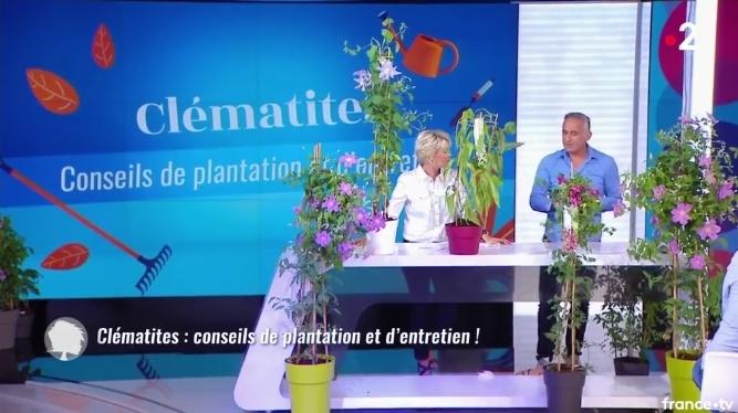 Javoy Plantes, dans la chronique Jardin de C'est au Programme sur France, présentée par Philippe Collignon