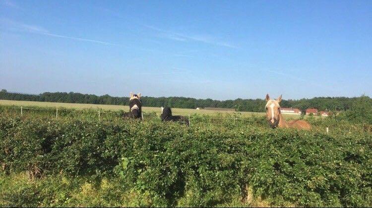 Ihr Pferd ist nicht alleine.