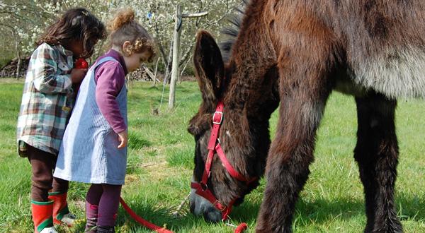 Les ânes de Madame - Balades et randonnées nature accompagnées - Châteaux de la Loire - Cheverny, Chambord - Vacances en famille