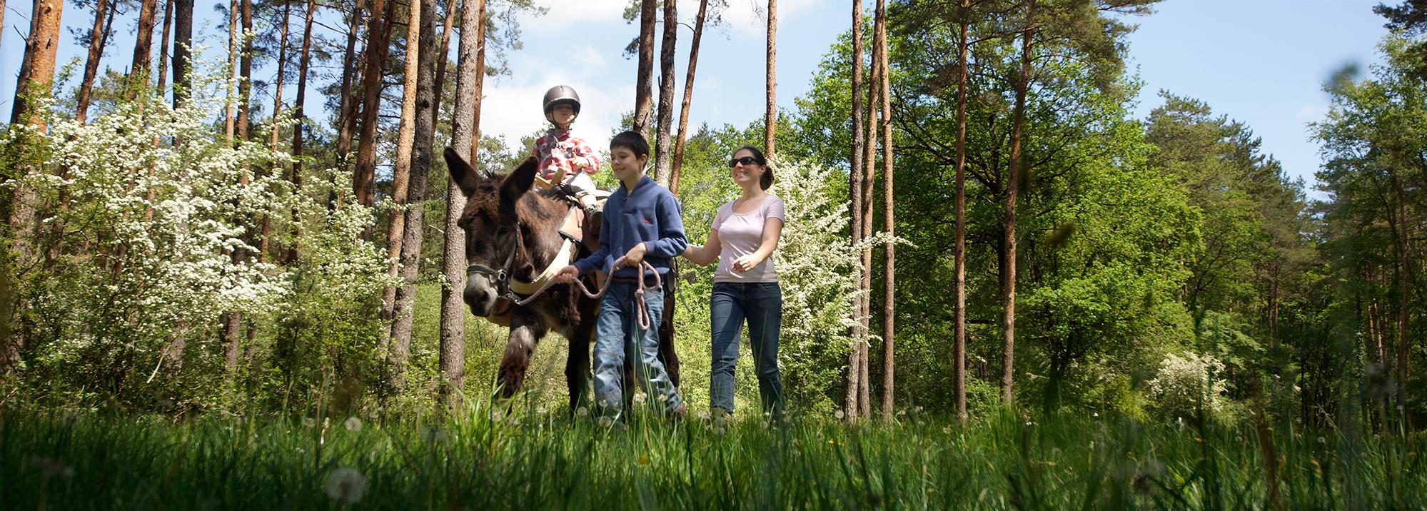 Balade en famille avec les ânes