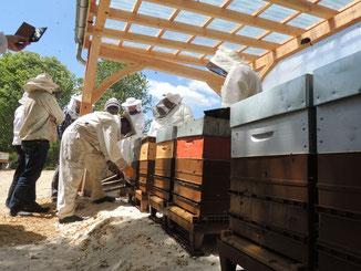 Photographie d'un groupe de personnes habillées avec un équipement de protection apicole penchées sur des ruches en cours de visite