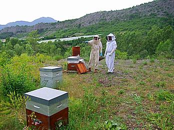 Dans un rucher l'apiculteur professionnel passe les consignes à son employé avant de commencer la visite des ruches