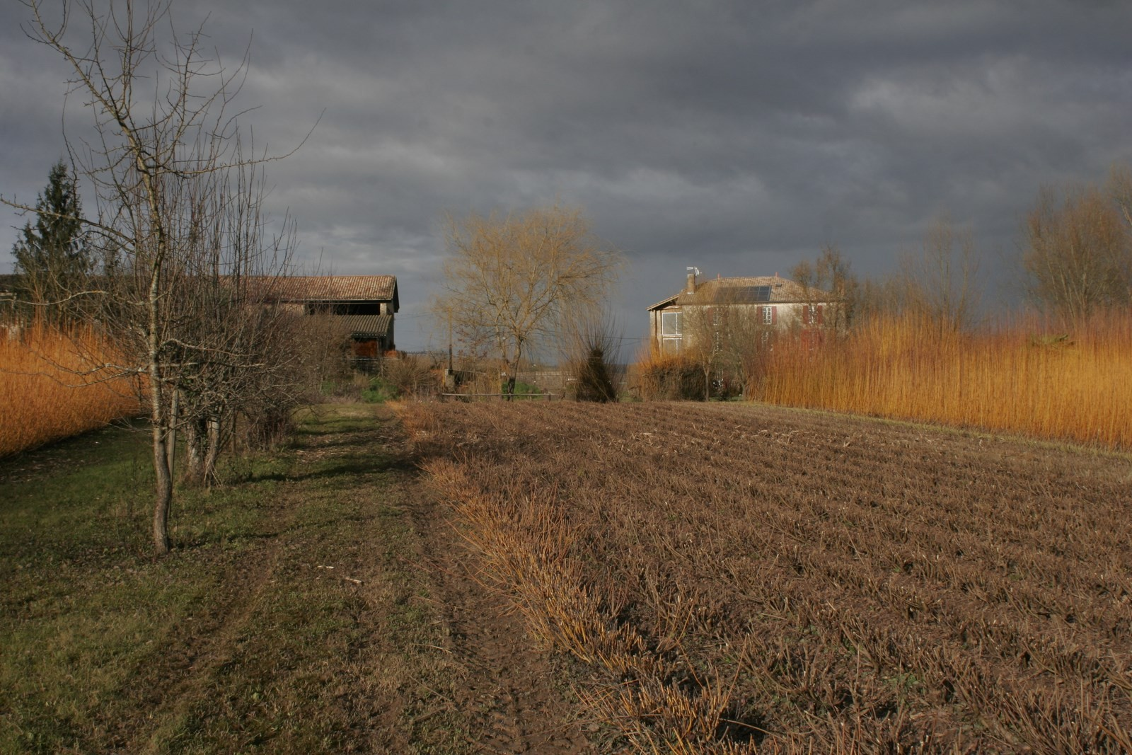 Les champs à la décrue
