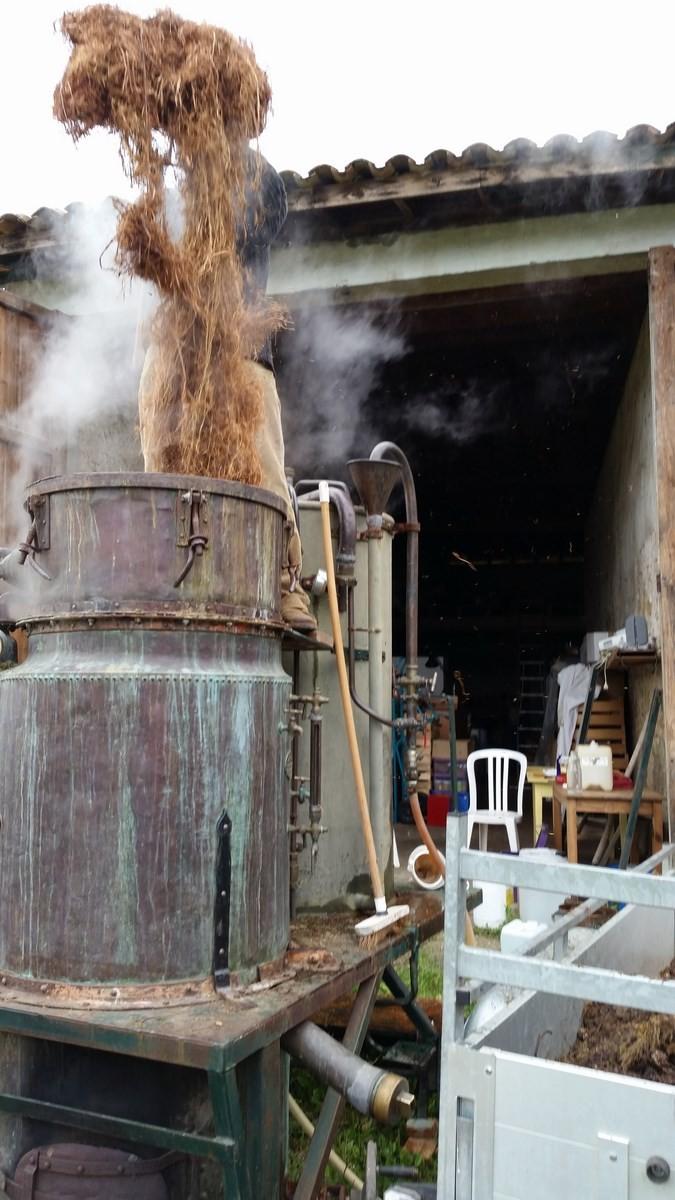 Distillation de peau d'osier chez Yoan Musseau