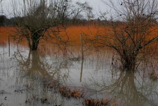 Innondation fin janvier 2014