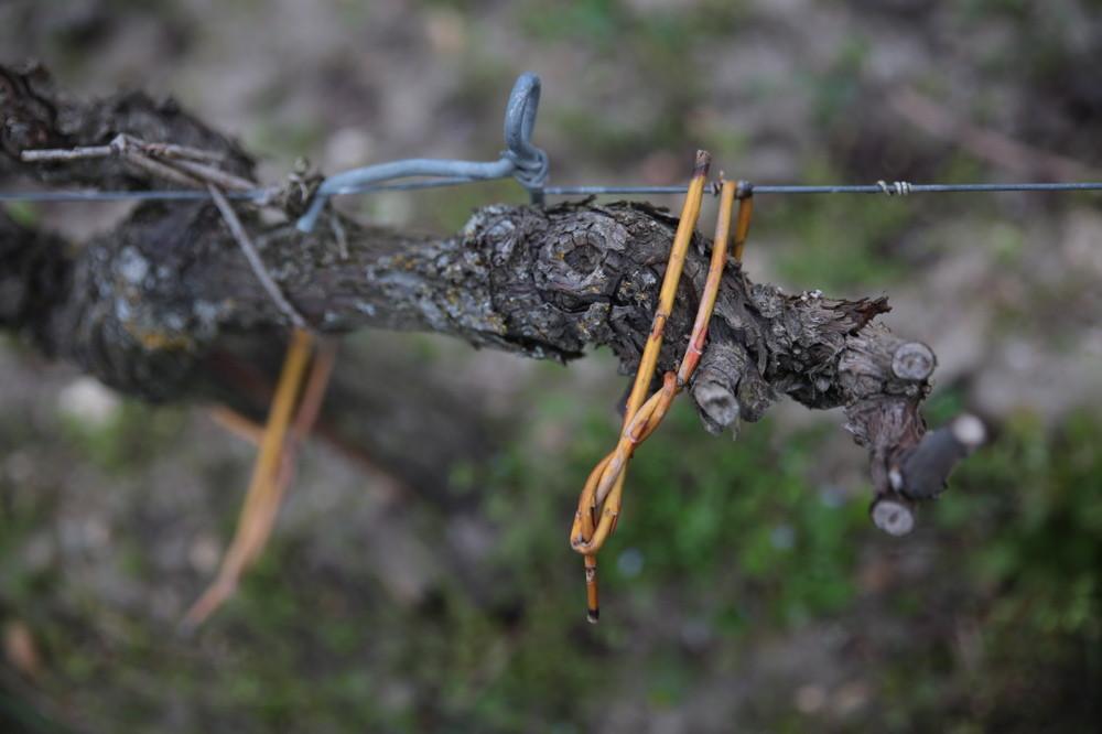 notre vîme est employé à attacher les vignes