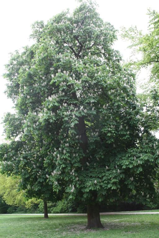 Neustadtswallanlagen Bäume 3