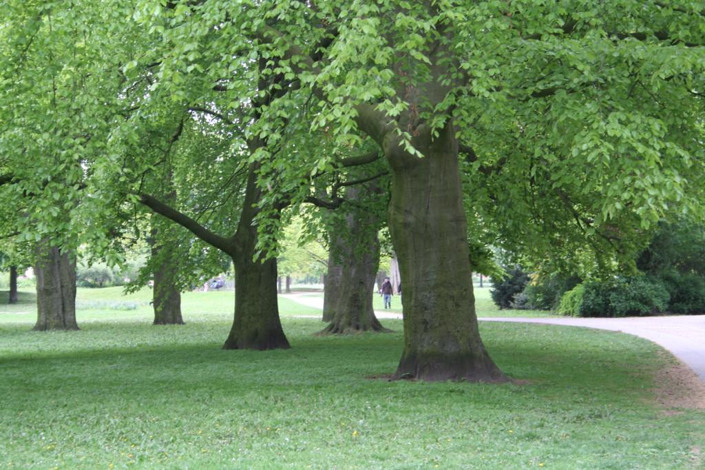 Neustadtswallanlagen Bäume 2