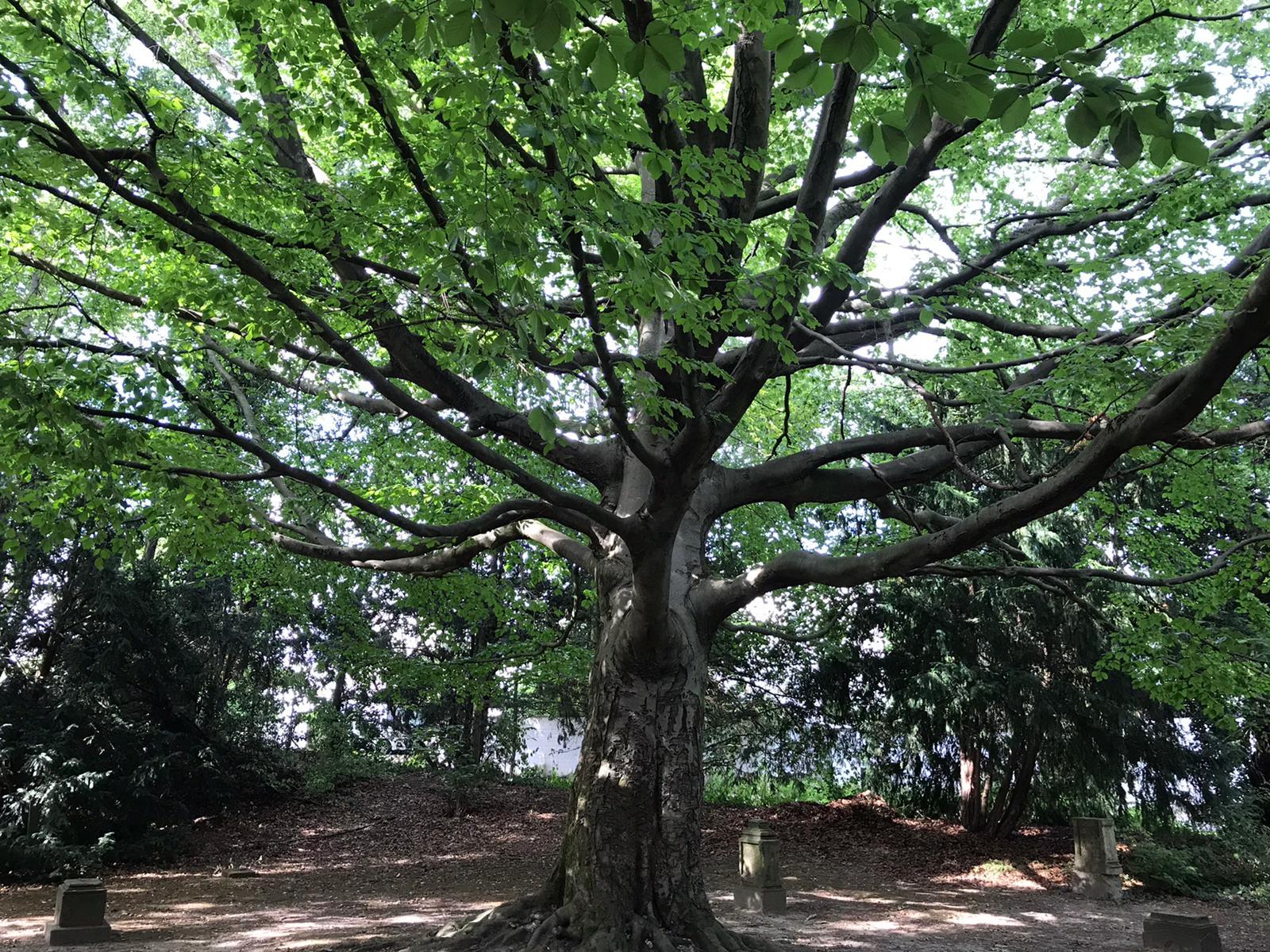 Was ein Baum!