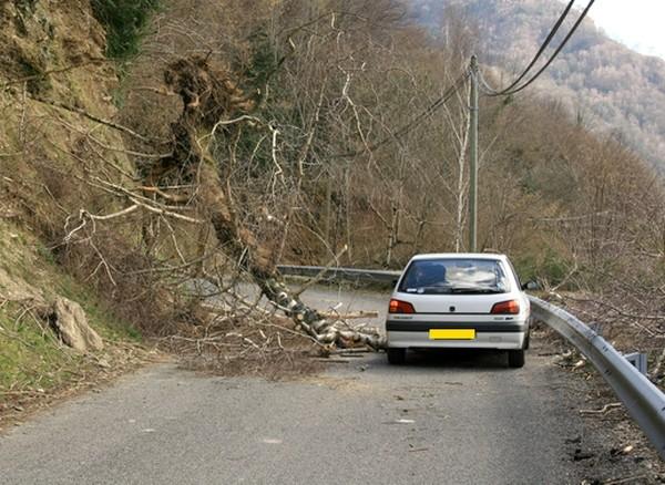 De nombreuses routes coupées par les arbres © C-PRIM 2010