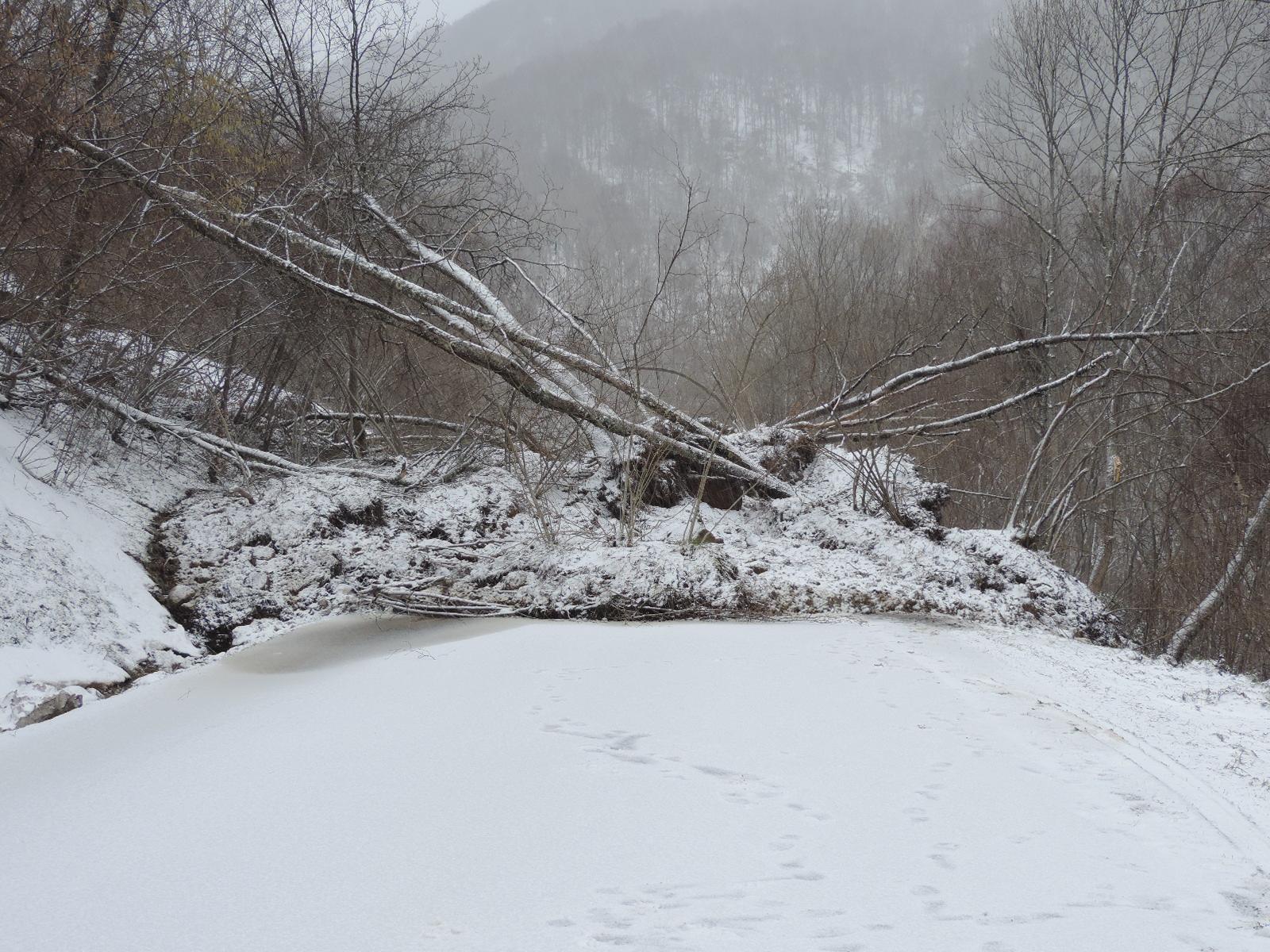 Les arbres ont été emportés par le mouvement. © DDT 09