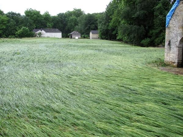 Dans la commune d'Estialescq, le ruisseau de l'Auronce a débordé violemment. Les prairies sont couchées par la violence des flots. © c-prim 2011