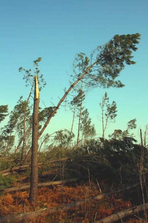 Les forêts ont subi un lourd tribut. Photo prise au nord du département, à la frontière des Landes. © C-PRIM 2009