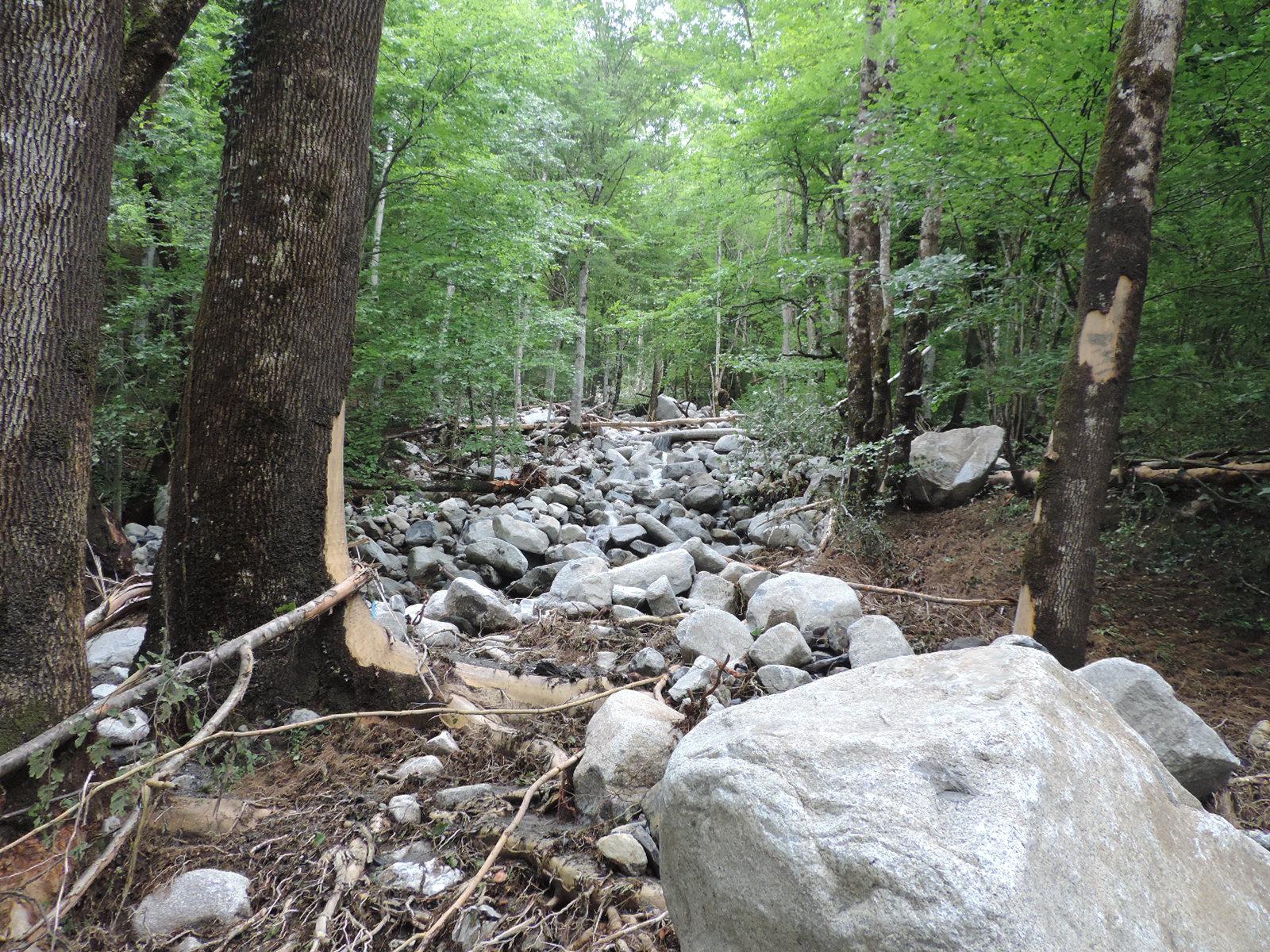 Les arbres les plus robustes ont tenu face aux embâcles. © DDT 09