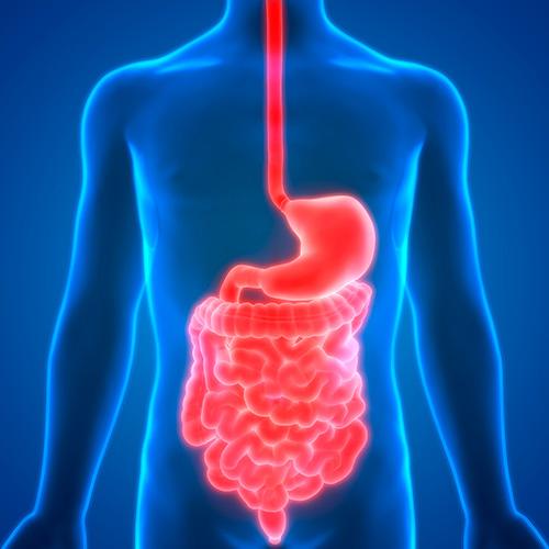 osteopathe voiron quentin millet digestif douleur ventre ballonnement diarrhée constipation brulures estomac colon crohn maladie coeliaque
