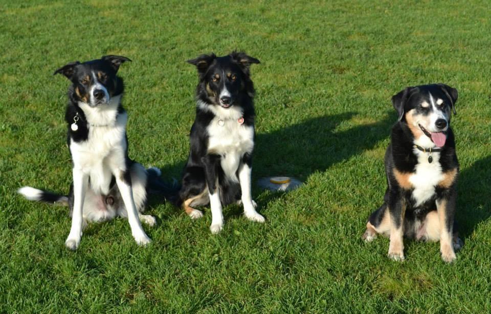 Lu, Brax und Terry