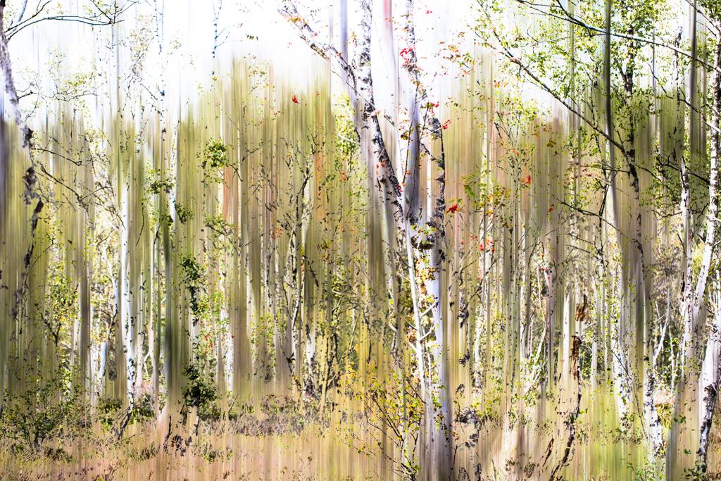 Moorwald (Doppelbelichtung), Ingo Heymer