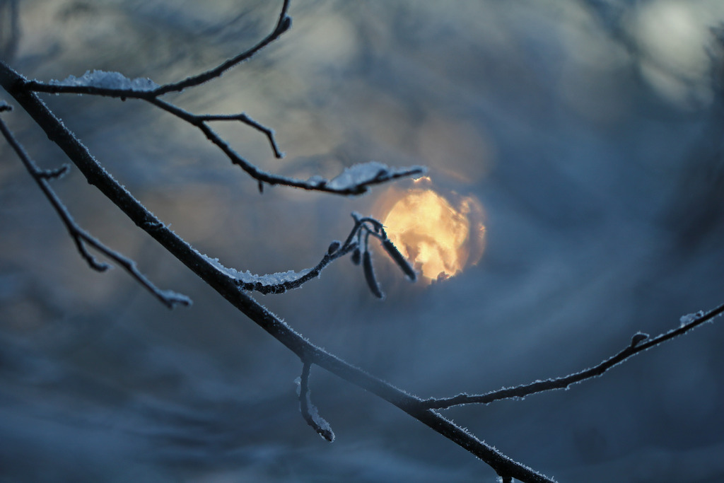 Morgensonne - Elke Riesmeier