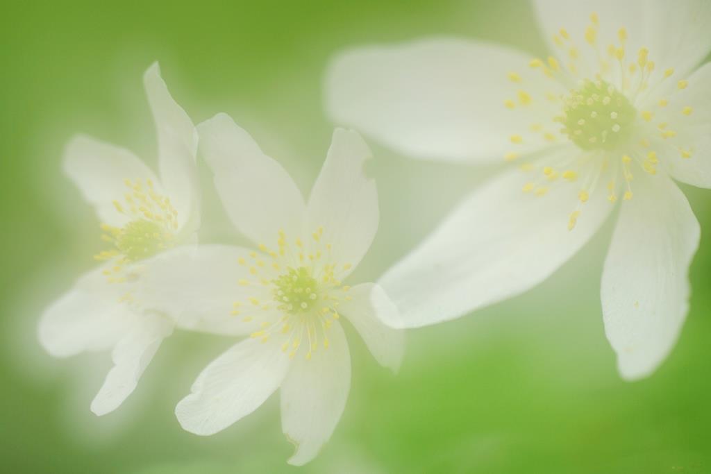 Frühling. Michael Joost