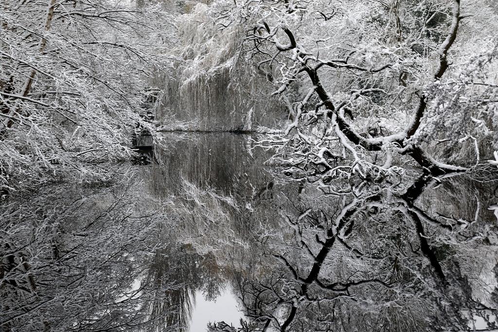 Alte Hunte im Schnee. Gottfried Walter