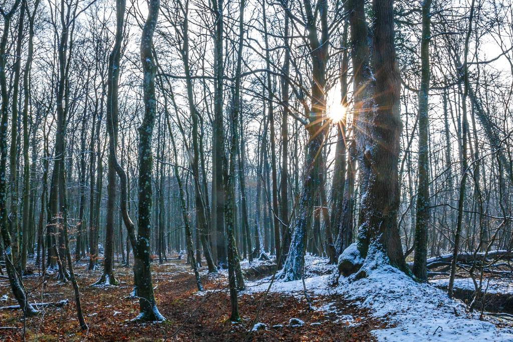 Winter. Roland Zschornack