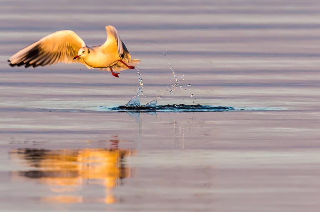 take-off. Ingo Heymer
