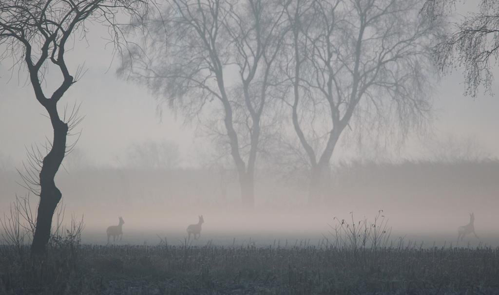 Nebelstimmung. Gottfried Walter