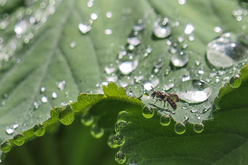 Fliege auf Regentropfen. Klaus-Dieter Haak