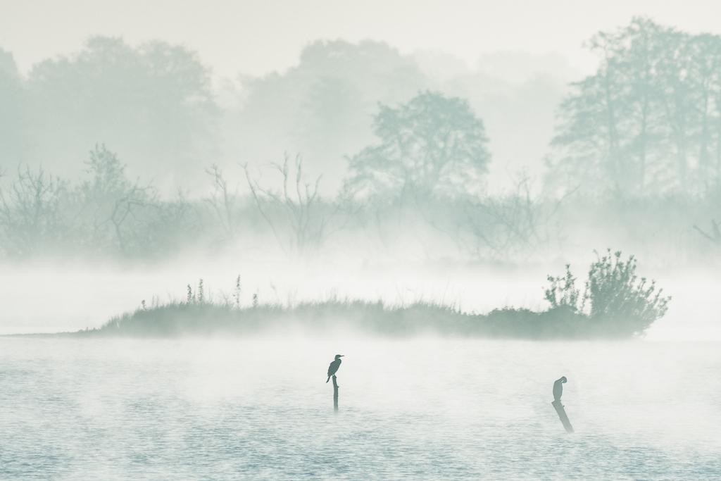 Aper Tief im Nebel - Michael Greilich