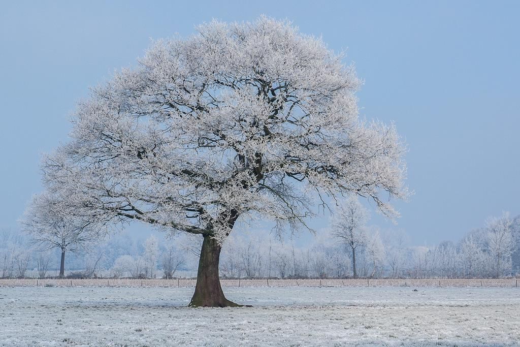 Winter. Klaus-Dieter Haak