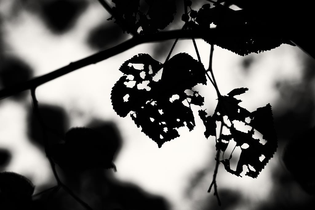 Die dunkle Seite des Herbstes. Micheal Rüffer
