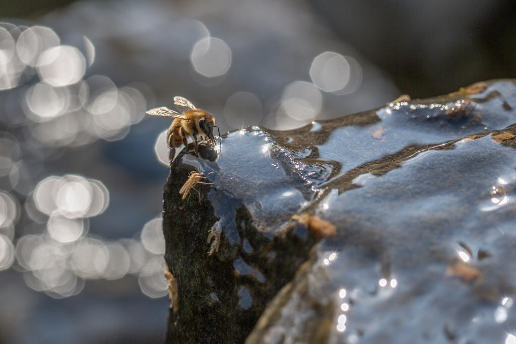 Wasserspiele mit Biene. Silke Lorenz
