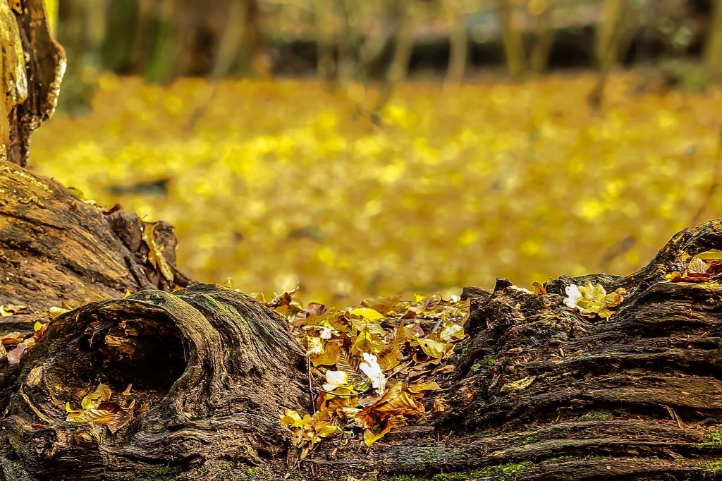 Laub im Wald. Ralf Ehben