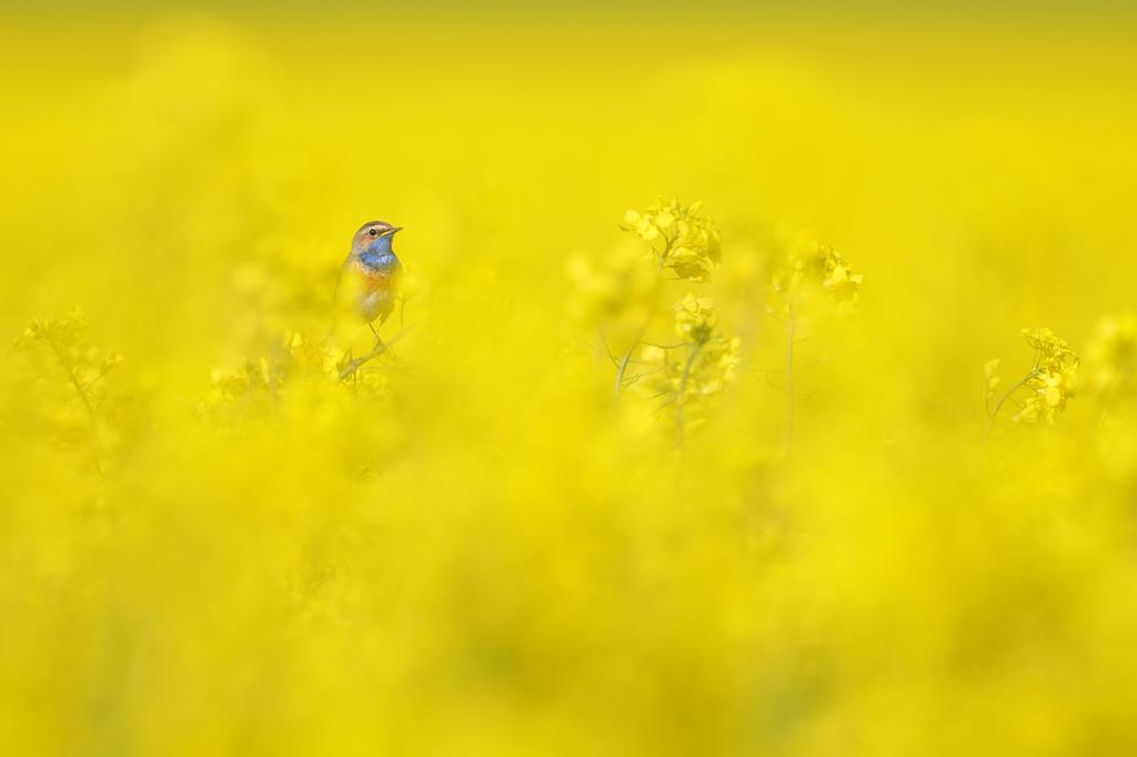 Hans Katzenberger. Viel Gelb und wenig mehr...