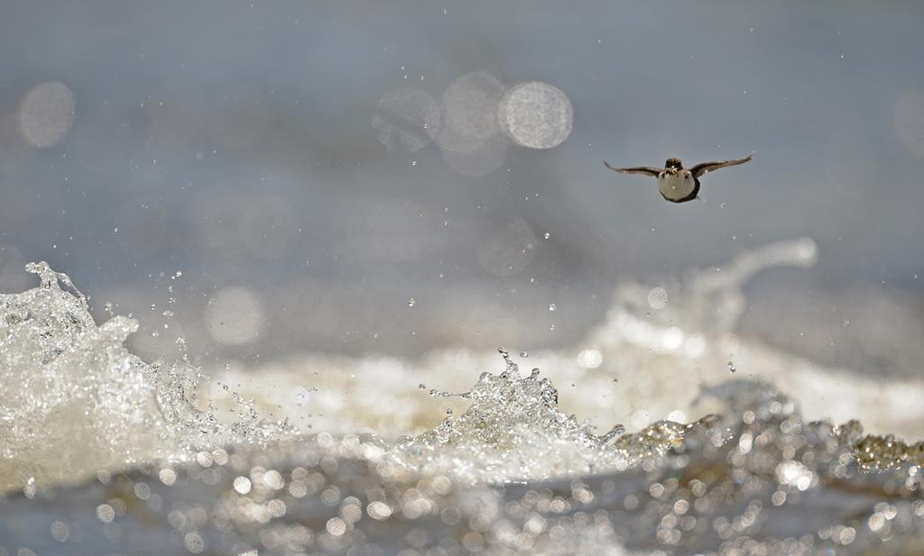 Über den Wellen. Hans Katzenberger