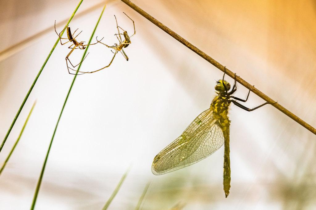 Spinnen und Libelle - Michael Rüffer