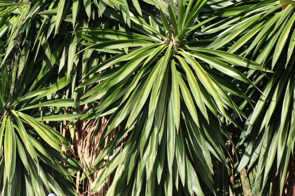 Tropischen Pflanzen in Nusa Dua
