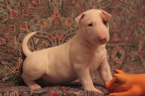 Алиментный щенок живет в Чернигове