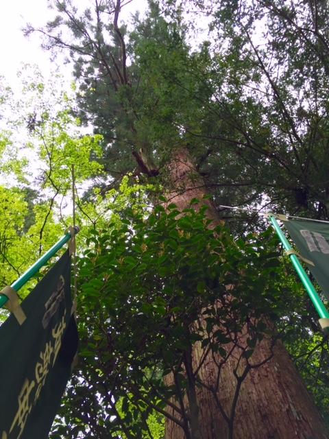杉や檜の大木が此処彼処に。。