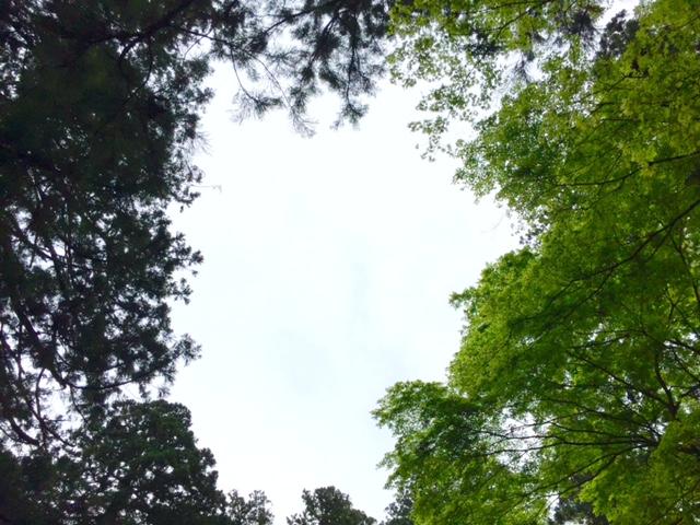 緑の合間から,ぽっかり見える空。この場所、かなり癒されます:)