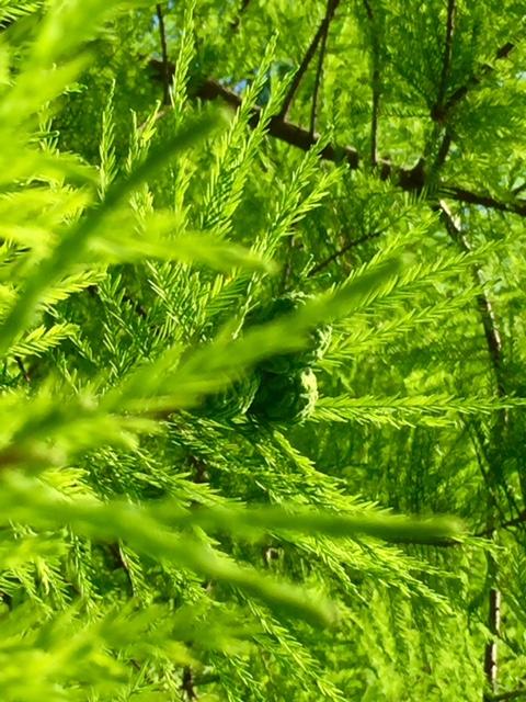 若い木の実