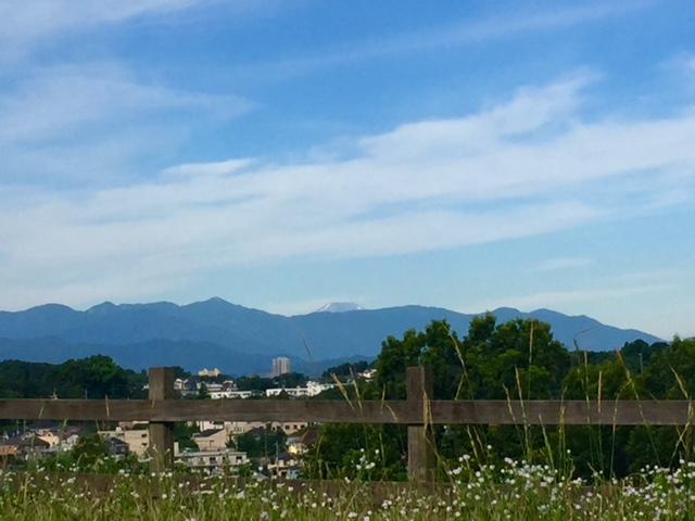 富士山が遠くに。。
