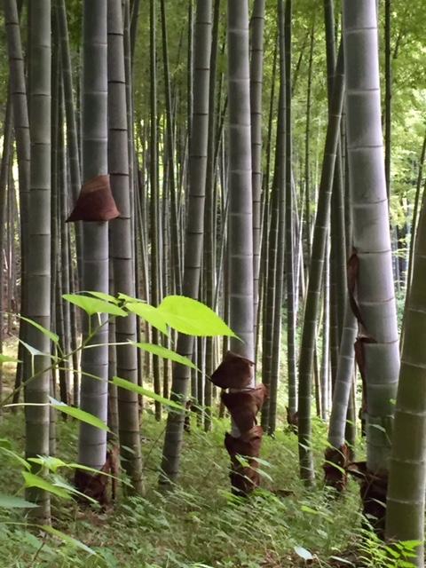 竹林にて。竹の皮がルーズソックスみたいでした。。。