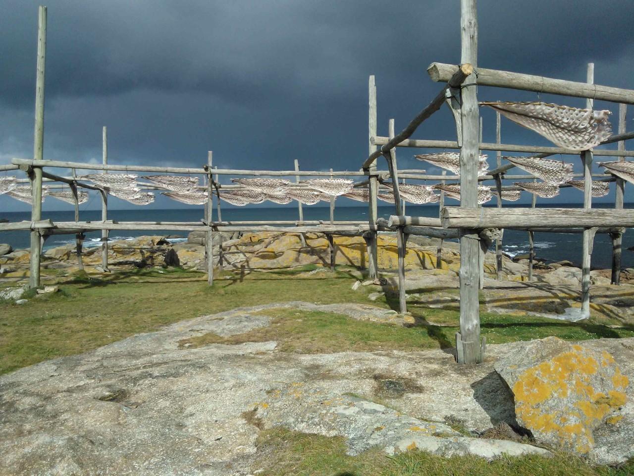 Secadoiros tradicionais de congro en Muxía (Abril de 2012)