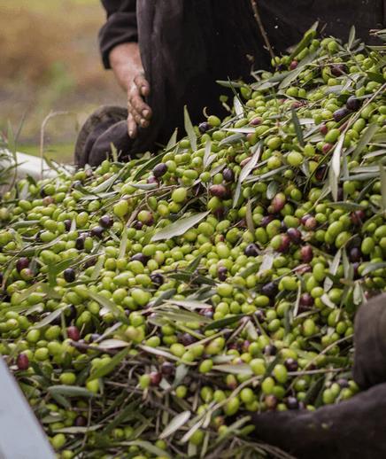 Acquisto olio extravergine di oliva biologico